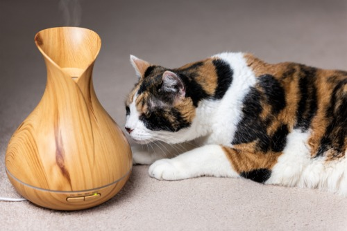 essential-oils-for-pets