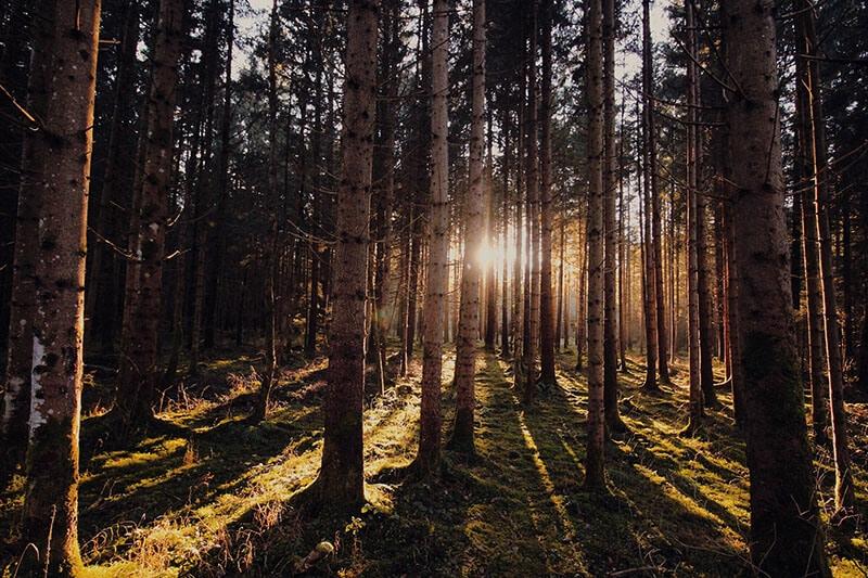 Australia-Cypress