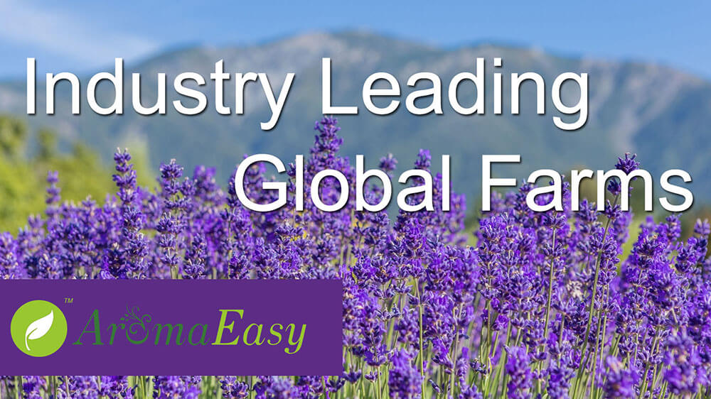 Global Farms-A