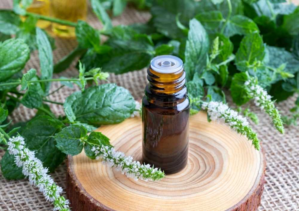 Peppermint-essential-oil-for-blister